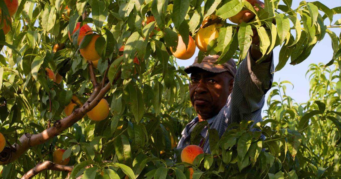 Migrant farm worker